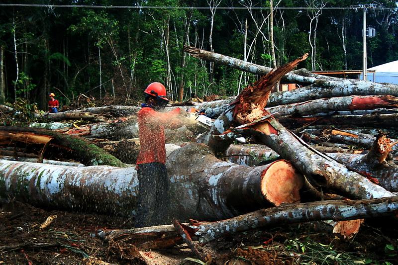 Resultado de imagem para desmatamento no brasil