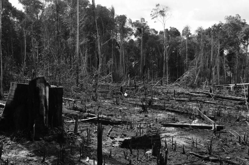 Resultado de imagem para Bolsonaro diz que divulgação de dados sobre desmatamento prejudica o Brasil